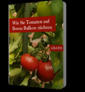 Wie Sie Tomaten auf Ihrem Balkon züchten