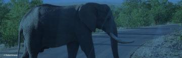Bessere Webtexte schreiben: Versuchen Sie es mal mit der Elefantentechnik!