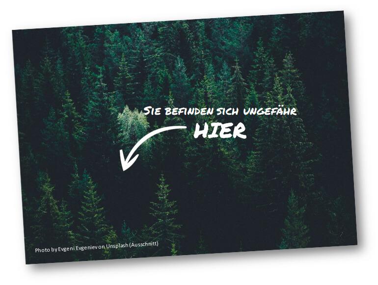 TextCoaching: Wer beim Texten zu nah an seinem Thema ist, sieht schnell den Wald vor lauter Bäumen nicht